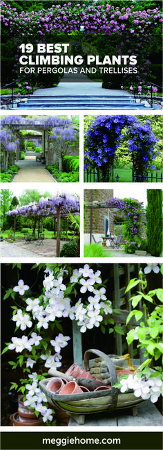 19 Best Pergola Plants 2019 Yard Pergola as well as Gazebo Style Concepts. Include color as well as design to your outside home with among these special frameworks. The post 19 Best Pergola Plants 2019 appeared first on Patio Diy. Diy Pergola, Corner Pergola, Pergola Swing, Pergola With Roof, Wooden Pergola, Outdoor Pergola, Backyard Pergola, Backyard Landscaping, Pergola Ideas