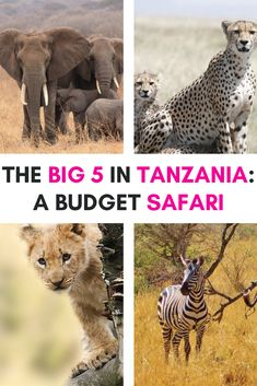 A budget safari in Tanzania is a fantastic way to experience the country's wildlife, creating unforgettable memories. Here's what to expect from a budget safari | Safari Tanzania | Safari Tanzania National Parks | Tanzania travel | Tanzania safari | Tanzania safari Serengeti | Tanzania safari lodges | Tanzania safari animals | Tanzania honeymoon safari | Camping Safari Tanzania | Serengeti National Park Tanzania | Tanzania Serengeti National Parks | Serengeti Safari | Serengeti Safari Camp Tanzania National Parks, Serengeti National Park, Tanzania Safari, Big 5, Game Reserve, Wild Dogs, Travel Activities, Safari Animals, Zebras