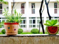 5 pokojových rostlin, které fungují jako čističky vzduchu a nejde je zahubit