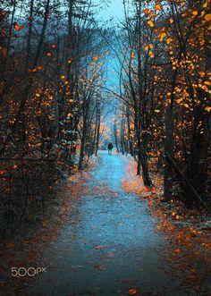 ***Forest Path (Bosnia and Herzegovina) by Mevludin Sejmenovic on 500px cr.