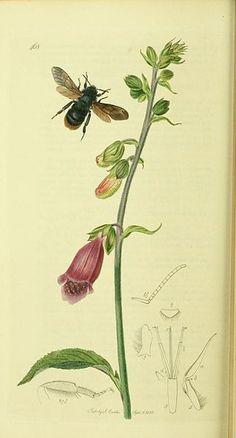 Secret Life of Bees essay help? Please?