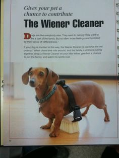Hehehe! Maybe a weiner dog wouldn't be a bad idea!