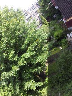 photo: Bart Gorter  Backyard from my balcony. Rotterdam