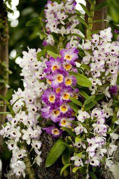 Beautiful Flowers, Amazing Flowers, Vertical Garden, Wonderful Flowers, Orchids, Planting Flowers, Natural Garden, Botanical Gardens, Flowers Nature