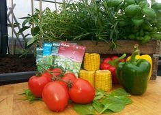 Dyrk dine egne grønnsaker eller urter.