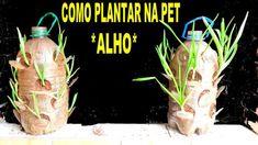 COMO PLANTAR NAS GARRAFAS PET (ALHO)