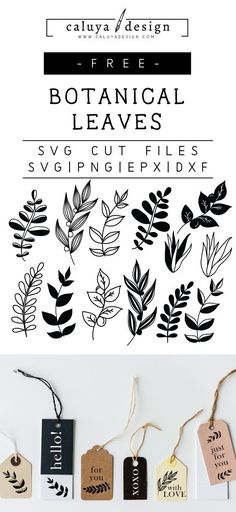 FREE botanical leaves SVG cut file, Printable vector clip art download. Compatible with Cameo Silhouette, Cricut explore and other major cutting machines. 100% for personal use, only $3 for commercial use. Perfect for DIY craft project with Cricut & Cameo Silhouette. Wedding SVG, leaf SVG, nature SVG cut files, green SVG cut files, quote SVG cut files leaves SVG cut files