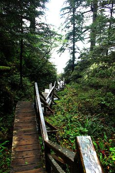 BRITISH COLUMBIA | Stairs along the Willowbrae Trail, PACIFIC RIM NATIONAL PARK