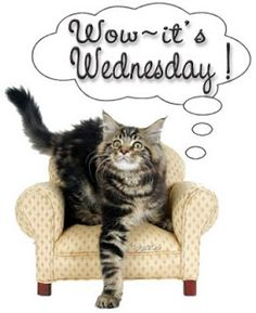 WORDLESS WEDNESDAY - WOW IT'S WEDNESDAY