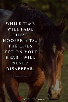 Beautiful Loss of Pet Quotes – Art Of Equitation Horse Poems, Horse Riding Quotes, Horse Love Quotes, Horse Sayings, Equine Quotes, Equestrian Quotes, Pet Loss Quotes, Inspirational Horse Quotes, Horses