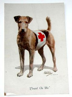 Irish Terrier, Airedale Terrier, Scottish Terrier, Terrier Dogs, Maggie Mae, Felt Dogs, Wire Fox Terrier, Irish Boys, Dogs