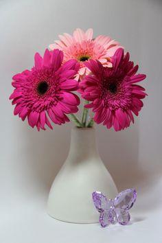 Gerbera, Vase, Flowers, Home Decor, Nature, Plants, Decoration Home, Naturaleza, Room Decor