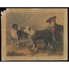 Print - Varty's Series of Domestic & Wild Animals Collie (left) and Old English Sheepdog (right).