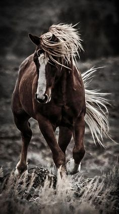 Horse photography from Wes & Dotty Weber on Fine Art America Most Beautiful Animals, Beautiful Horses, Beautiful Creatures, Beautiful Gorgeous, Naturally Beautiful, The Animals, Horse Photos, Horse Pictures, Majestic Horse