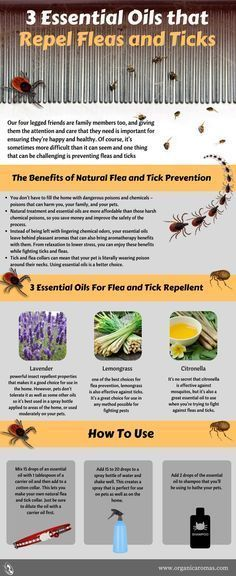 3 Essential Oils that Repel Fleas and Ticks - repelling fleas and ticks with the help of some essential oils and a bit of effort is something that makes sense and that should be your first choice when you& trying to do this. Essential Oils For Fleas, Essential Oil Spray, Tick Repellent Essential Oils, Pure Essential, Young Living Oils, Young Living Essential Oils, Tick Repellent For Dogs, Insect Repellent, Flea And Tick Spray