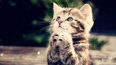 Kot się modli?