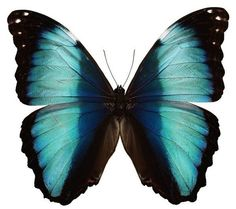 """Aqua and Black Butterfly Vinyl Decal by WilsonGraphics on Etsy, $4.40 6"""" x 6"""""""