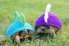 �Mascotas a punto! Ideas para abrigar a los animales de la casa | http://www.katia.com/blog/es/mascotas-punto-ideas-moda-prendas-abrigar-animales/