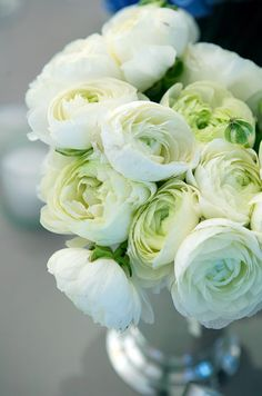 The green centers of white ranunculi add depth to a small arrangement in a silver vase.