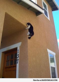 Ninja kitty waits for you...