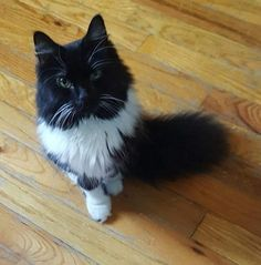 Check out Sadie's profile on AllPaws.com and help her get adopted! Sadie is an adorable Cat that needs a new home. https://www.allpaws.com/adopt-a-cat/domestic-long-hair/5063536?social_ref=pinterest