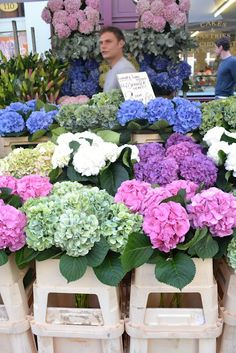 like a kid in a candy store at the Columbia Road flower market - purple, blue and green hydrangea