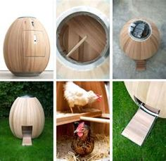 chicken-coops-nogg-egg