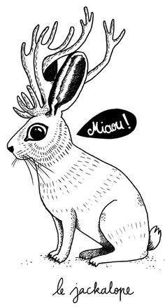 le jackalope