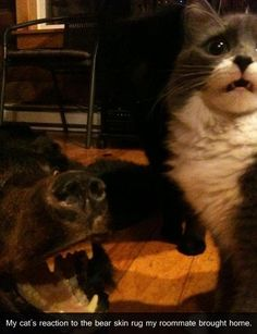 The cat is literally making this face --> D: