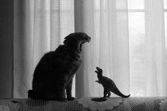 Rrrrr dino vs chat