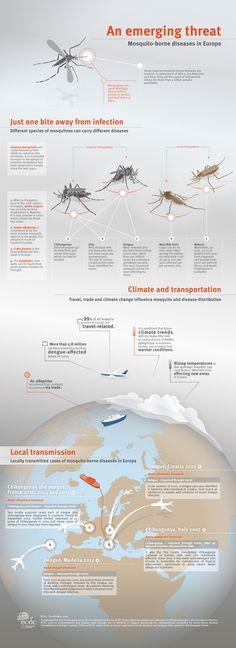 Mosquito-borne diseases infographic - West Nile, Zika, Chikungunya, Dengue