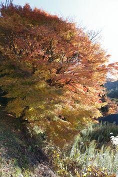 Autumn color. Arima,Japan.