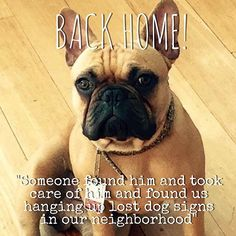 "#BackHome nugget - French Bulldog from #LosAngeles #CA has been reunited with his family. Lost on: Aug 16 2015. Date Back Home: Aug.17 2015. Message: ""Someone found him and took care of him and found us hanging up lost dog signs in our neighborhood"" Welcome home nugget!"