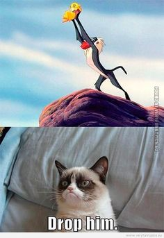 Grumpy Cat Pictures With Captions | Funny Pictures | cartoons animals | Grumpy meets Simba