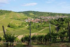 Vineyards outside Stuttgart, Wurttemberg, Germany Wine Tasting, Wines, Vineyard, The Outsiders, Germany, Europe, Culture, Explore, Travel