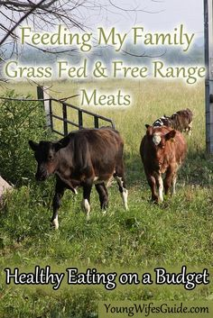 Why grass fed and free range meats are better for your family and how I manage to fit them into our budget.