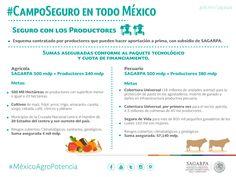 #CampoSeguro enTodo México. SAGARPA SAGARPAMX #MéxicoAgroPotencia