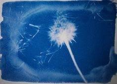 'Gust', cyanotype print. | Flickr - Photo Sharing!
