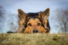 Rescue dog 🐶