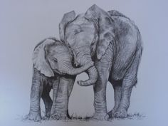 'FRIENDS' - A FINELY DETAILED DRAWING OF A BABY ELEPHANT AND HIS MOTHER WHO ARE COMPLETELY INSEPERABLE