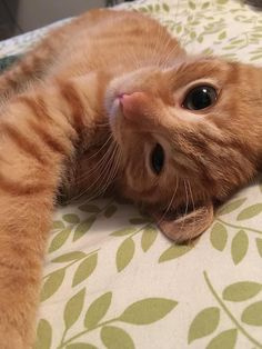http://www.littlethings.com/mama-cat-saves-her-baby/?utm_source=agap
