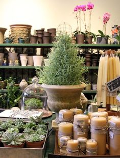 Shopper's Diary: GRDN in Brooklyn Gardenista