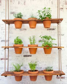 Doing some organic gardening is ideal and these tomatoes gardening tips are some of the best you will come across. Growing tomatoes in pots is ideal if you are suffering from limited garden space. If you are into the hobby of home gardening or Hanging Herb Gardens, Herb Garden Planter, Herb Garden Pallet, Hanging Herbs, Diy Herb Garden, Outdoor Gardens, Herb Gardening, Easy Garden, Verticle Herb Garden