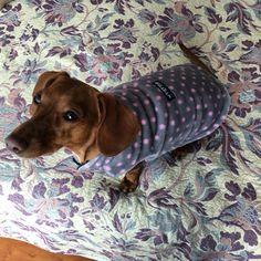 #friends #teckel #dachshund