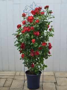 ラ・レーヌ・ドゥ・ラ・ニュイ Garden Spaces, Garden Pots, Flower Stands, Love Flowers, Flower Decorations, Outdoor Gardens, Garden Design, Planter Pots, Home And Garden