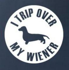 I trip over my wiener! Dachshund #doxie darlin'