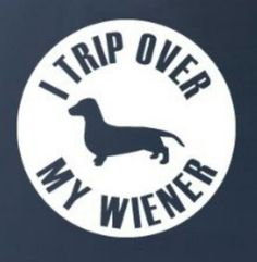 I trip over my wiener! Dachshund #doxie darlin'