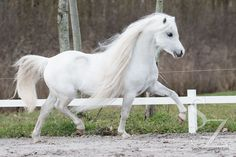 Omg cutest pony ever …