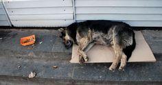 Que se cumplan las Leyes de protección animal