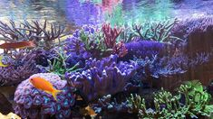 Reef Aquarium, Planted Aquarium, Lots Of Cats, Tank I, Just Give Up, Cat Hair, Beautiful Fish, Water Quality, Corals